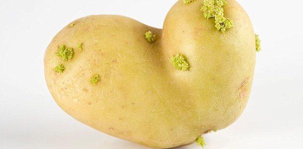 Filizlenmiş ve Yeşillenmiş Patatesin Zararları